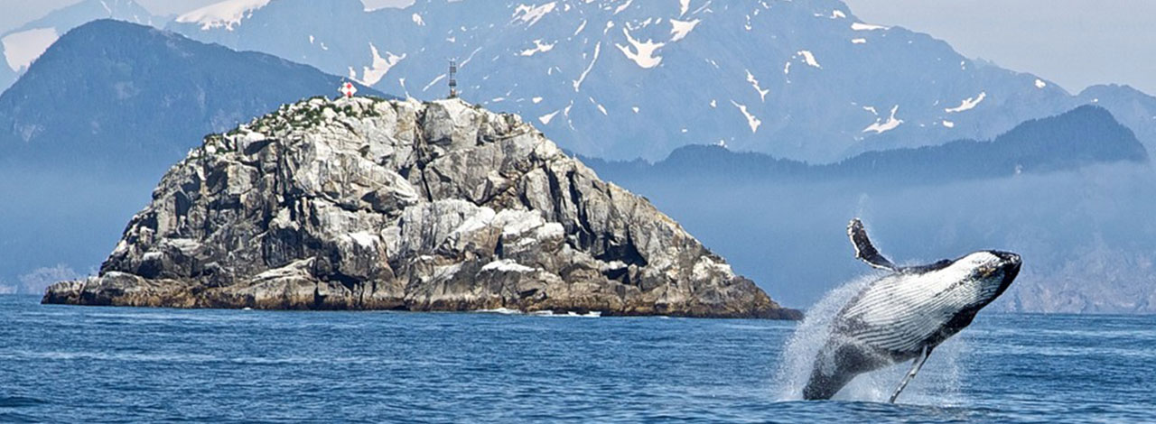 escorted Alaska cruise - whale